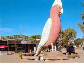 The Big Galah