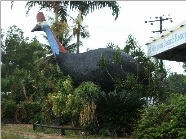 The Big Cassowary