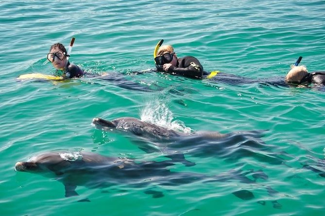 Swim with Dolphins Day Trip from Perth